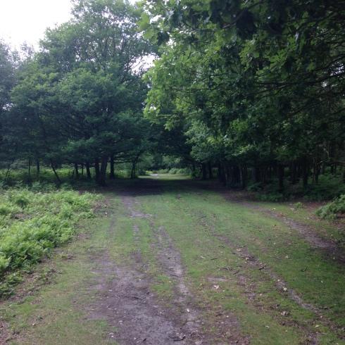 Path towards Bracebridge Pool