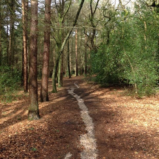 Sutton Park 2
