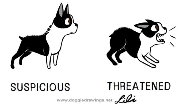 Suspicious-dog